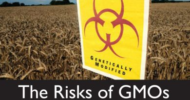 Risks of Genetically Modified Food