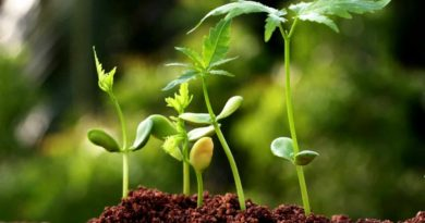 Biotech Application in Agriculture
