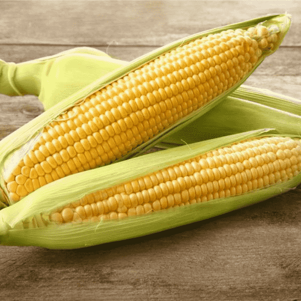 Modern Corn