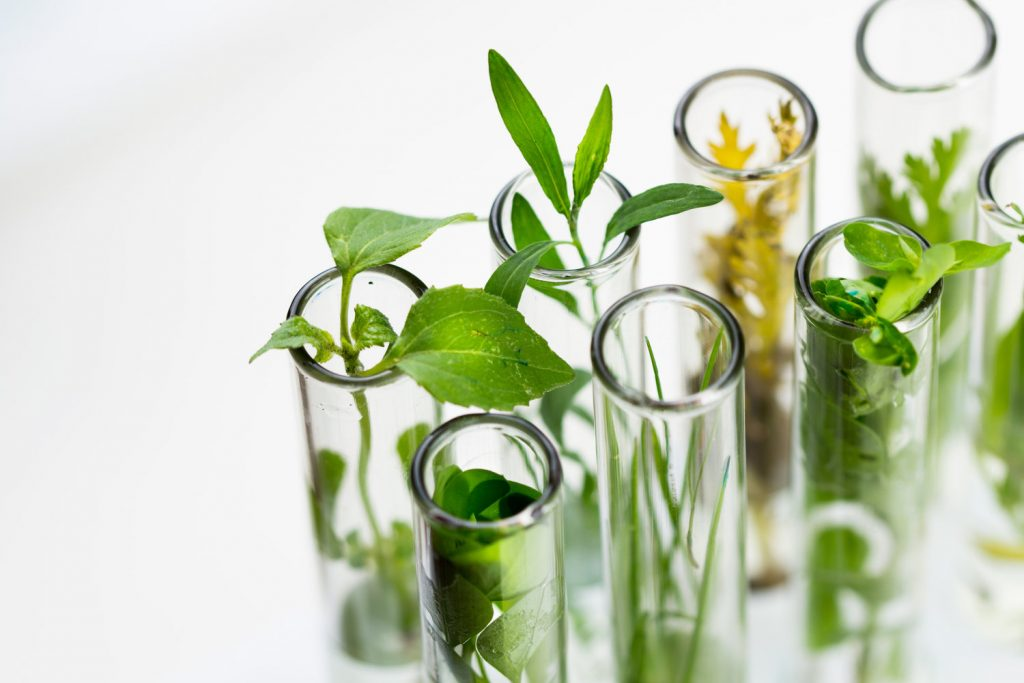 Branches-of-Biotechnology-Green-Biotech