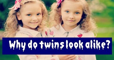 What we need to know about Fraternal Twins