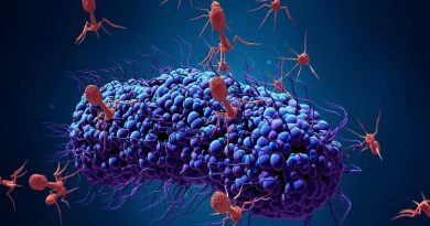 What is Phage Therapy. Everything You Need to Know