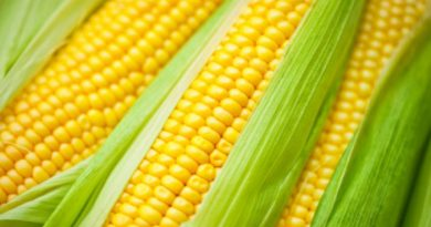 Application of Yellow Biotech