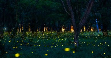 Plants And Insects that Glow's at Night