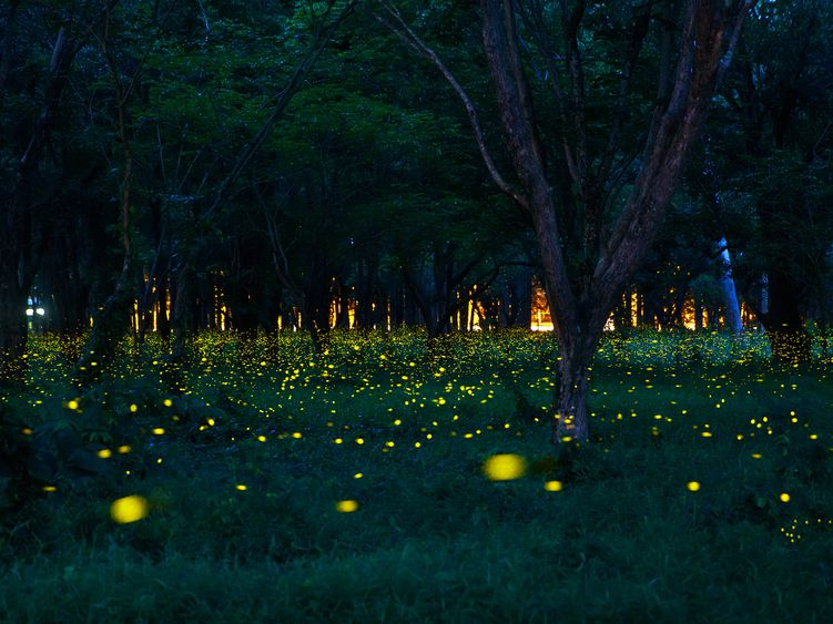Plants And Insects that Glow at Night