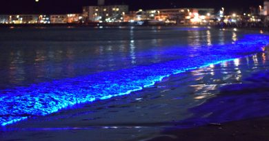 Top 15 Places in the World to see bioluminescence in Ocean Water